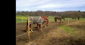 pferde-matschweide-1.jpg